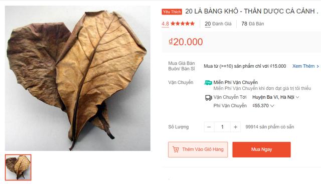 Lạ lùng: Lá bàng khô được rao bán 1.000 đồng mỗi lá trên sàn thương mại