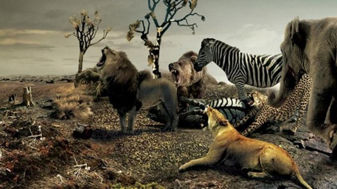 Đại dịch Covid-19: Do con người hủy hoại môi trường