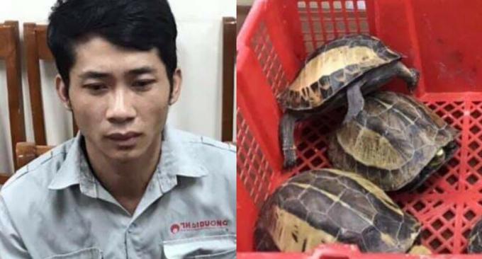 Đối tượng chuyên buôn bán rùa quý hiếm tại Hà Nội sa lưới