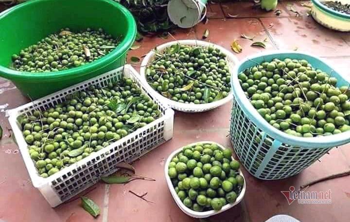 Đặc sản Hà Nội hết mùa, mua gom cấp đông ăn dần