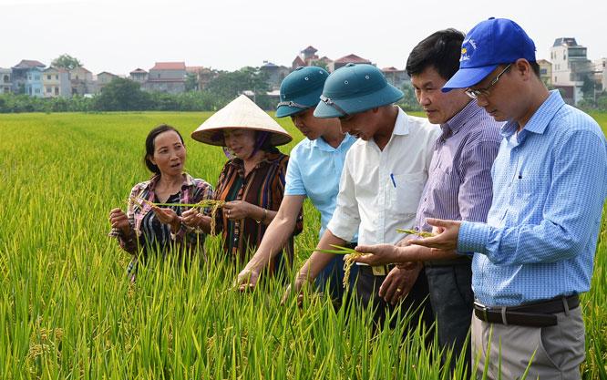 Mở hướng mới cho xuất khẩu gạo của Thủ đô