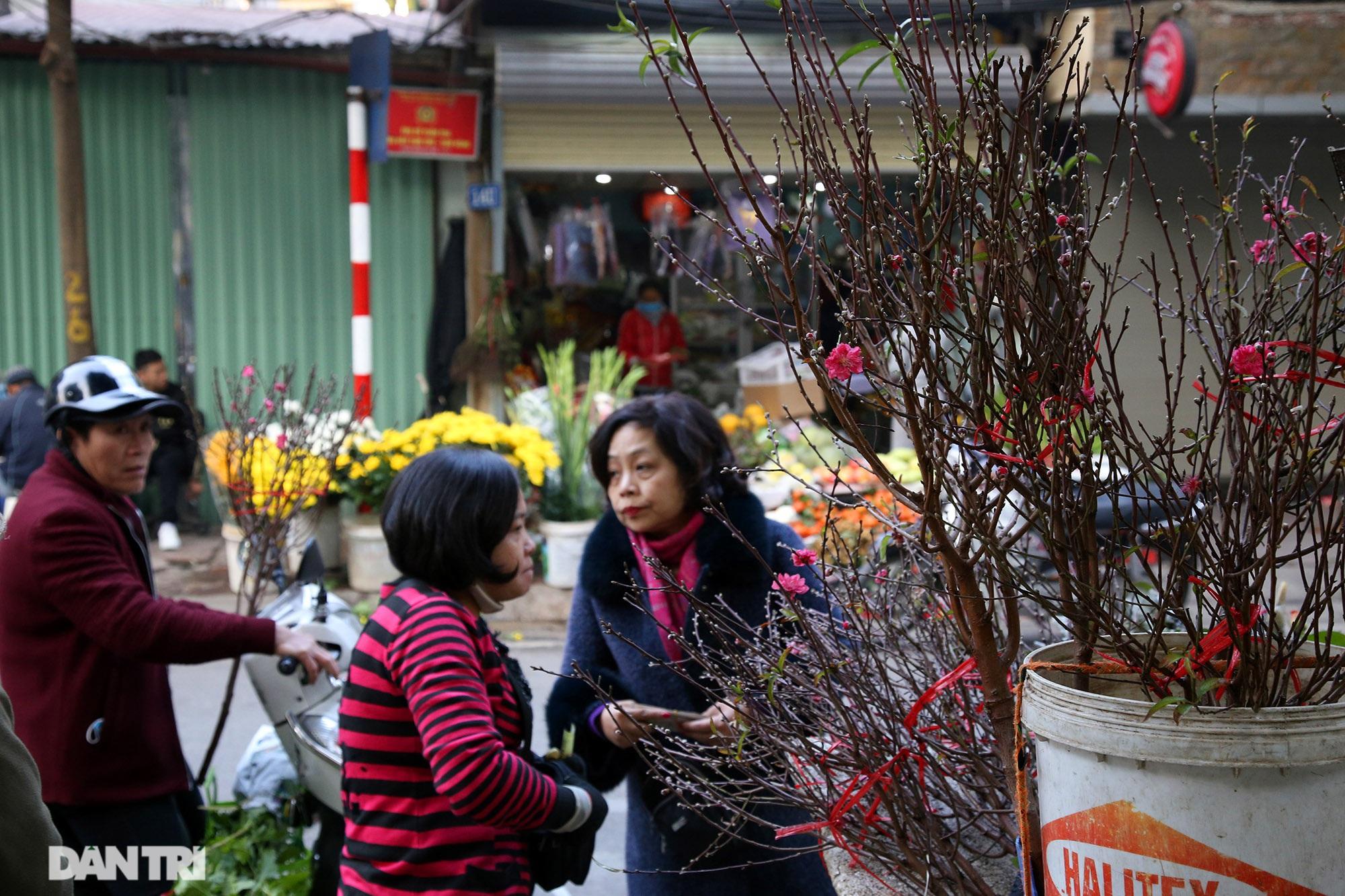 Đào sớm mang không khí Tết về trên khắp phố phường Thủ Đô