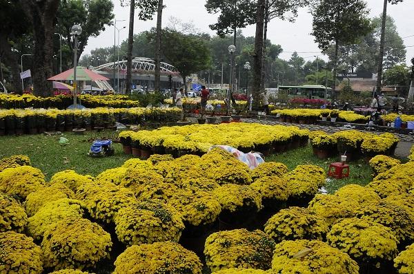 Hà Nội: Thị trường hoa cây cảnh Tết Tân Sửu vắng người mua
