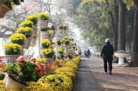Hoàn thành trang trí cây hoa, cây cảnh phục vụ nhân dân Thủ đô đón Tết