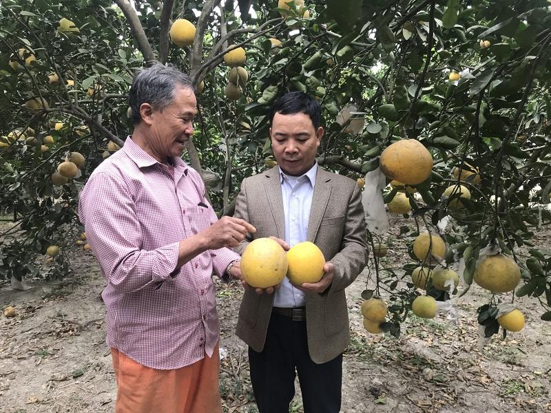 Để trái cây Thủ đô không bị lép vế