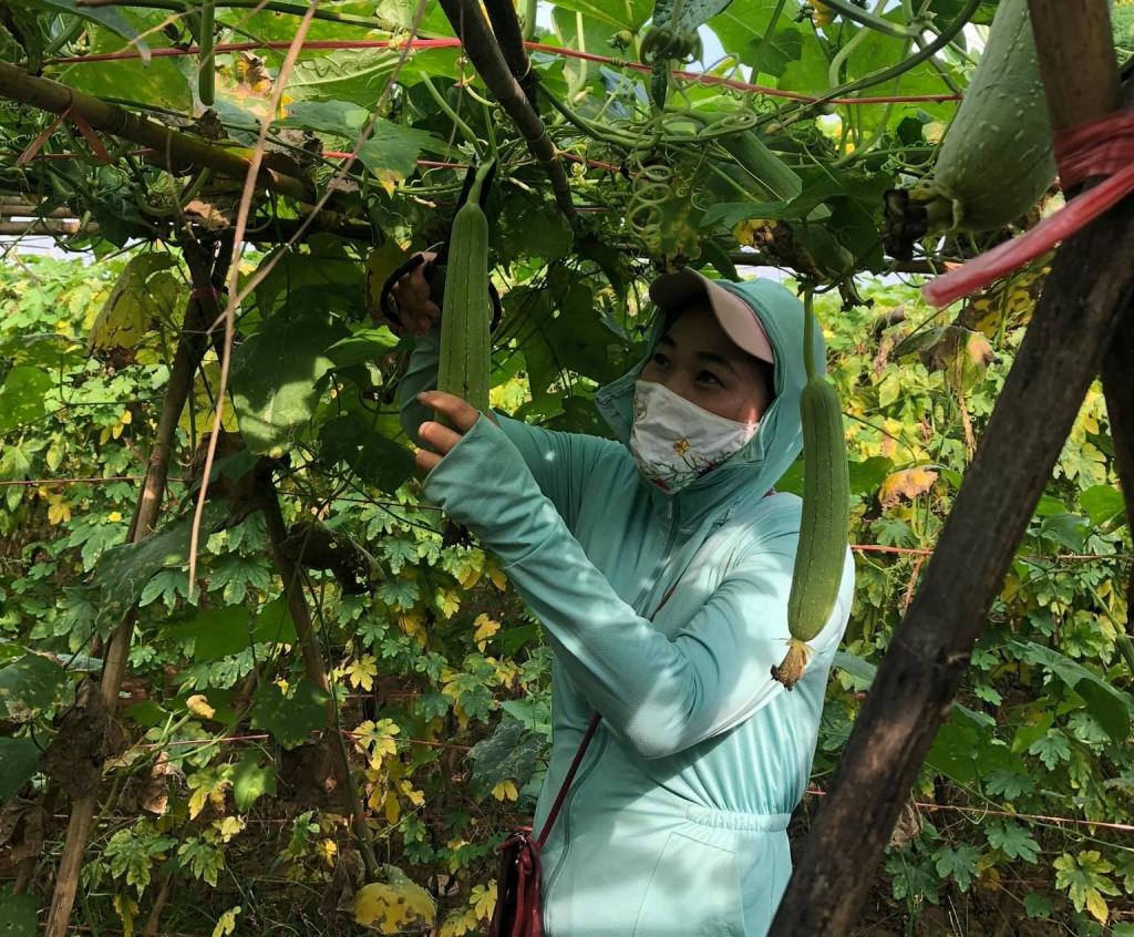 Hà Nội: Hỗ trợ, kết nối tiêu thụ nông sản từ Vùng 2, 3 vào Vùng 1