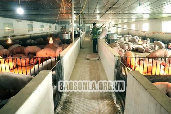 Xả thải bẩn ra môi trường, HXT chăn nuôi Ít Ong bị xử phạt nặng