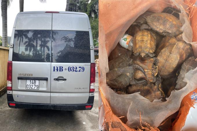 Quảng Ninh: Tạm giữ xe khách vận chuyển hàng chục cá thể rùa quý hiếm